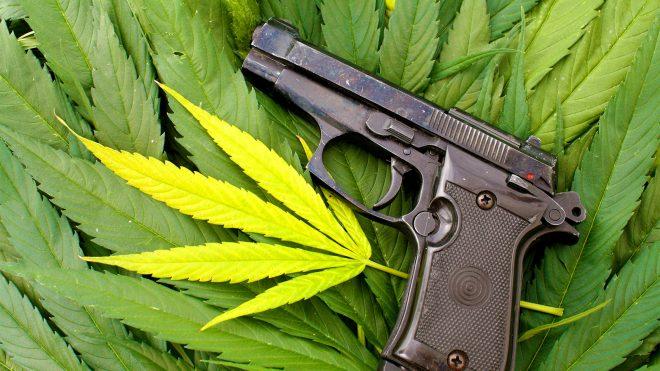 Firearms and marijuana